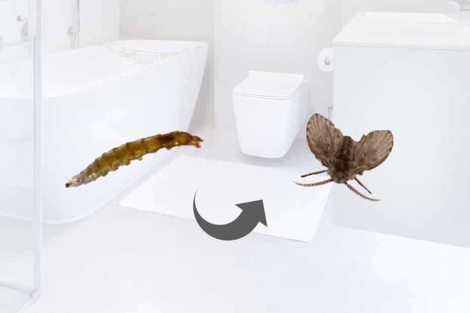 Drain Fly Larvae